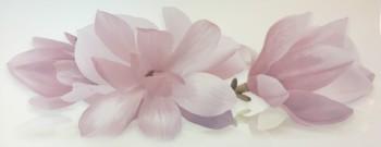 Yalta 1 Magnolia PN