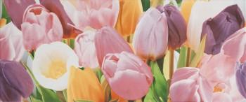 Alana Tulip PN
