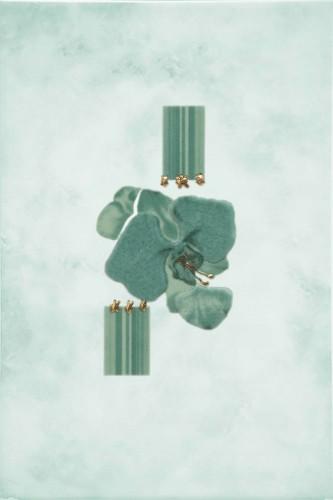 Goya Orchid GN