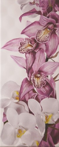 Sote Orchid