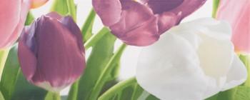 Tulip 2 PN