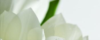 Tulip Maxi 2 W