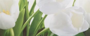 Yalta L Tulip 2 W