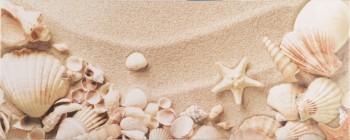Yalta 1 Seashells