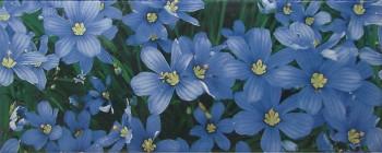 Yalta Flower BL